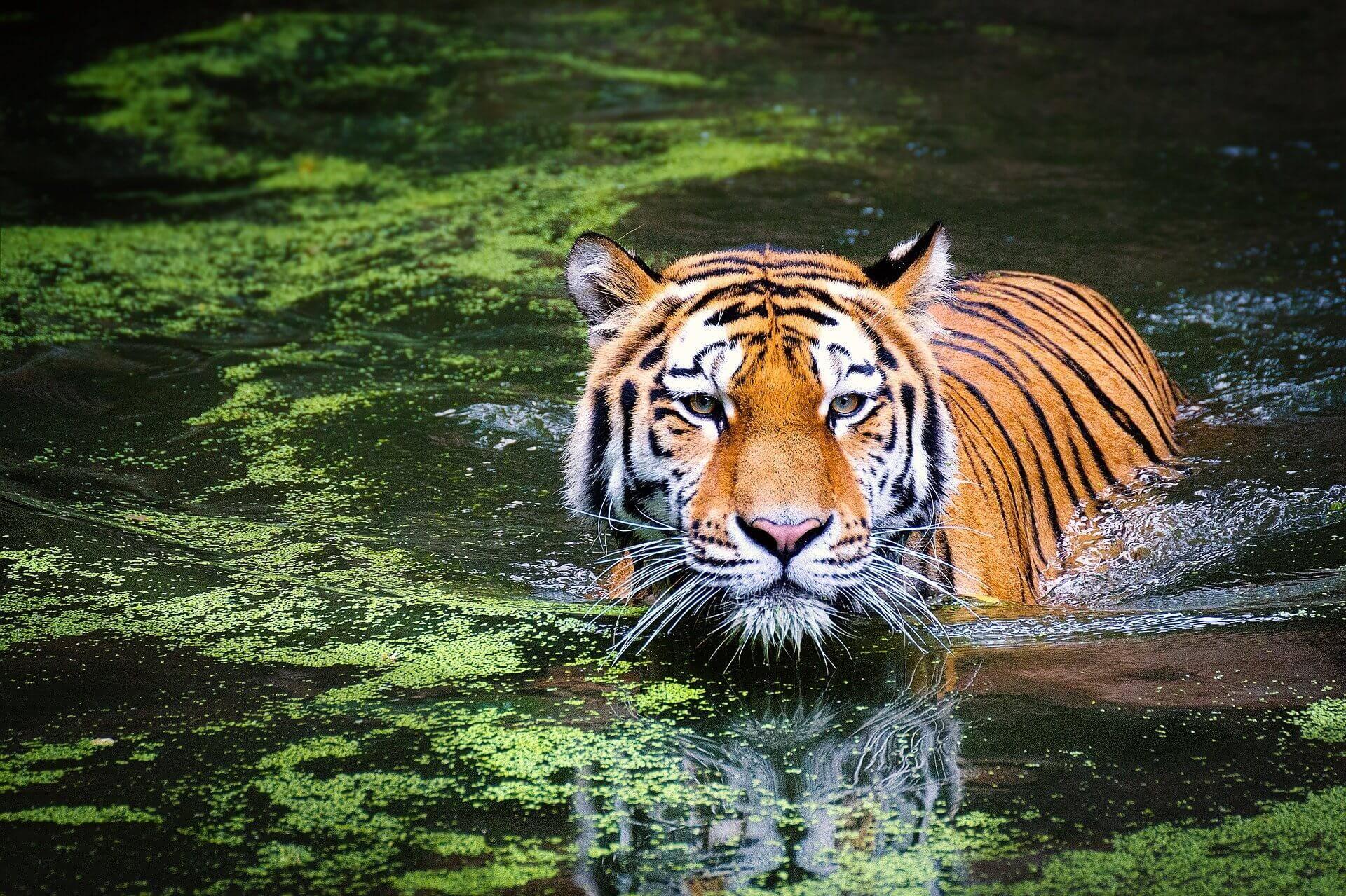 Tigre Selwo Aventura. Naturaleza en la costa del sol