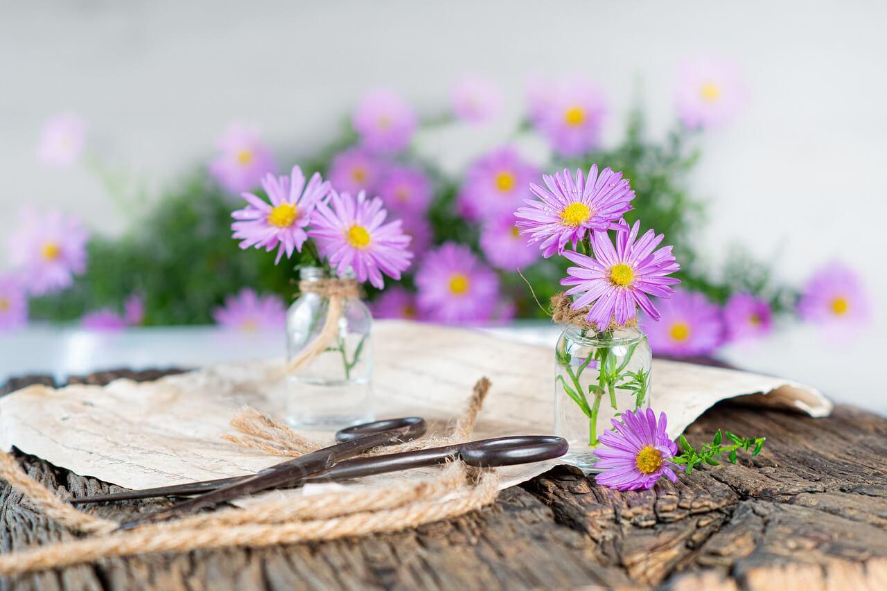 Flores para conseguir buen olor en la casa